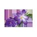 małe zdjęcie kwiatów krokusa