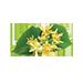 małe zdjęcie kwiatów lipy