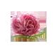 małe zdjęcie kwiatu róży